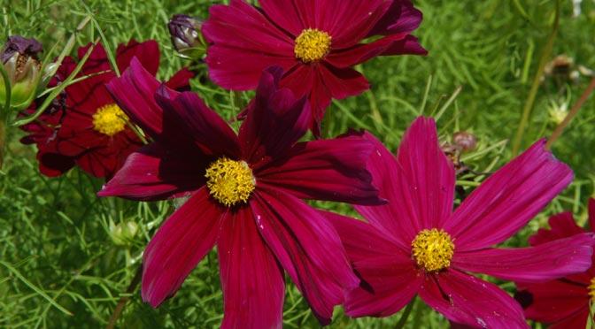 Get Beautiful Garden Color Fast!