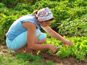 blog post organic gardening