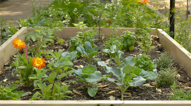 Three Myths About Organic Gardening