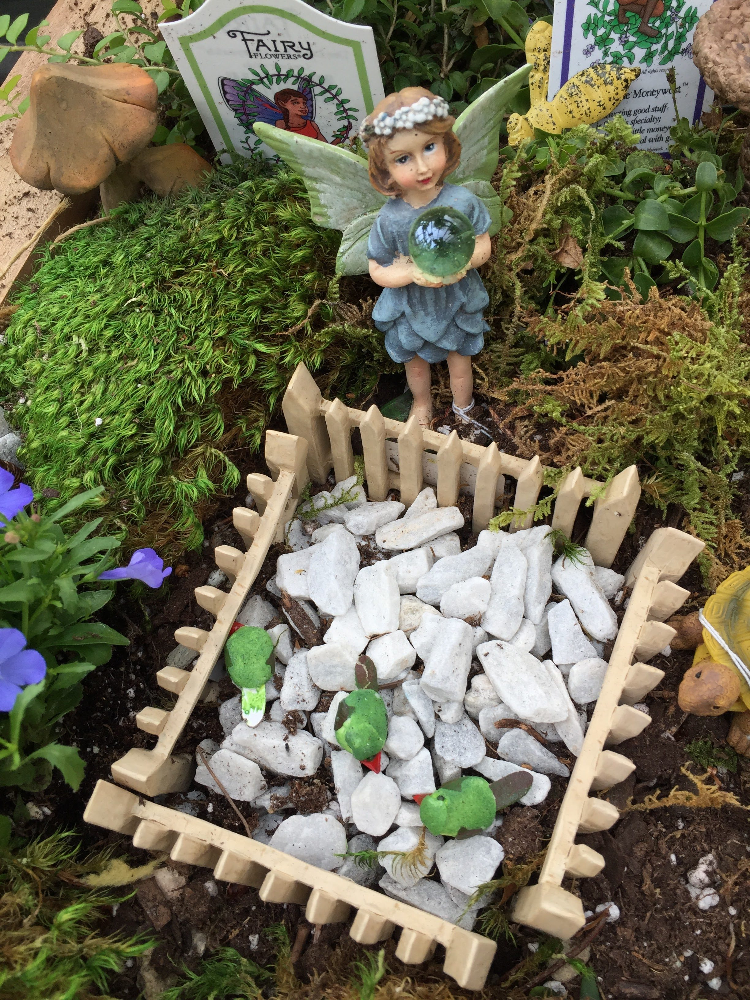 fairy gardens miniature fun crystal lake garden shop
