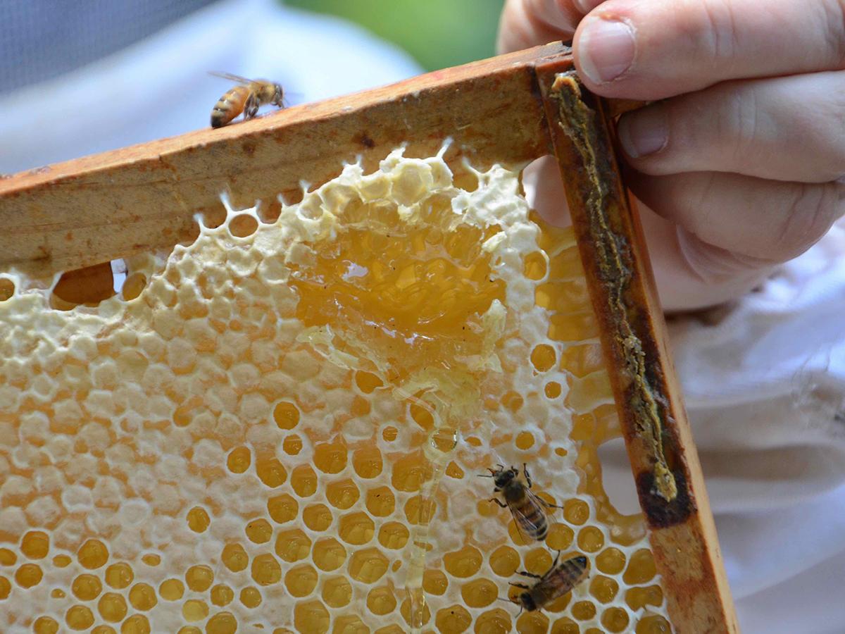 Honey Fall Festival