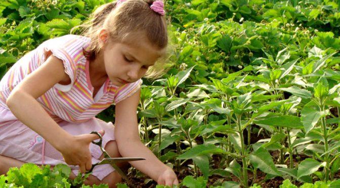 Recipe for a Successful Garden