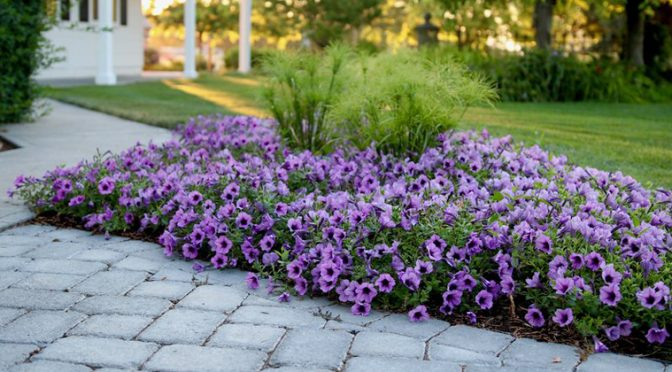 And the Winners are… 2018 Plants of the Year!